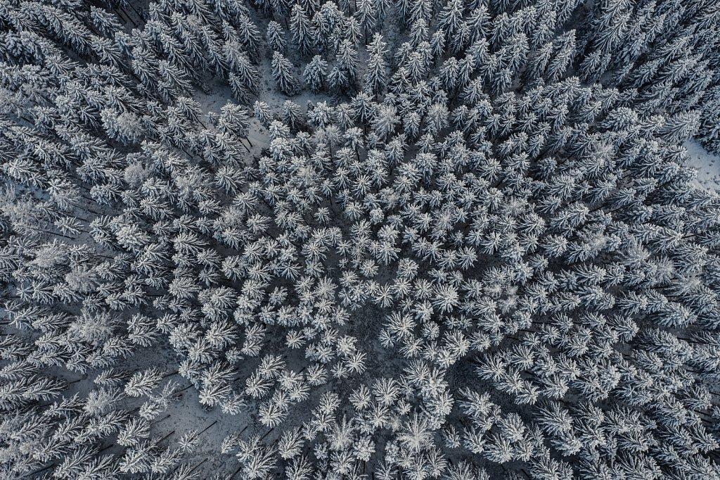 Drone-Wald-Winter.jpg
